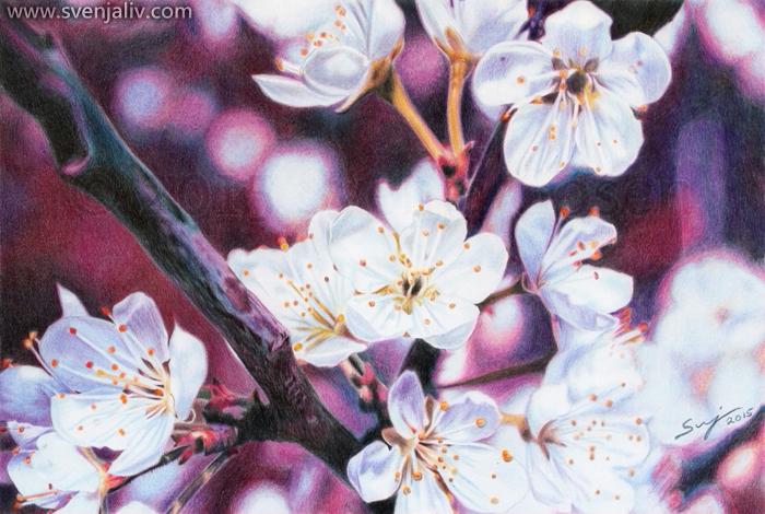 https://svenjaliv.com/cherry-blossoms/